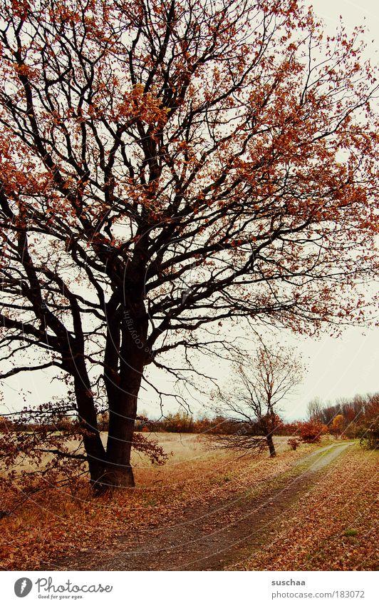 immer geradeaus .. Natur Baum Pflanze Blatt Wald dunkel Erholung Herbst Holz Wege & Pfade Landschaft Feld Wind Wetter Umwelt Erde