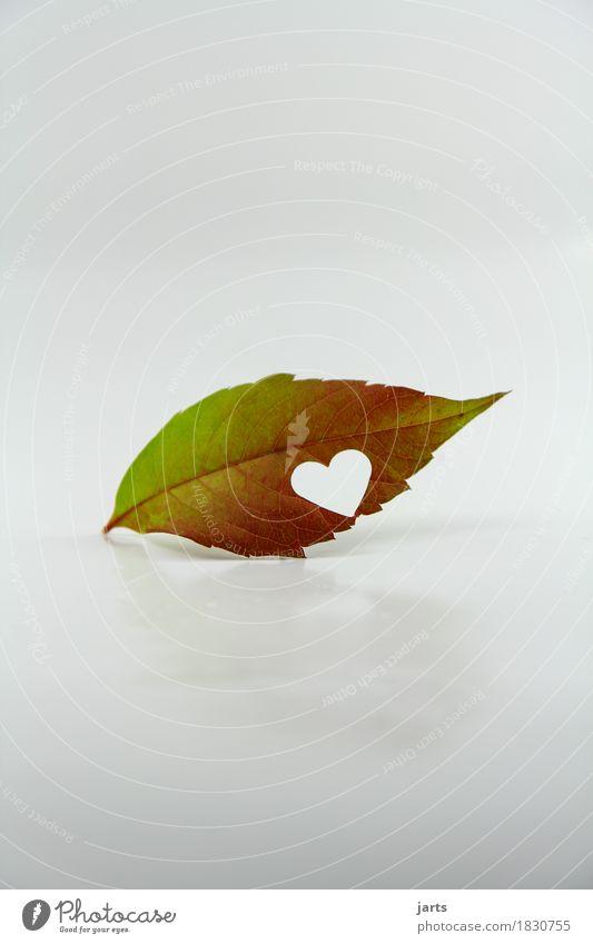herbztlich Natur Pflanze Blatt Liebe Herbst natürlich Glück außergewöhnlich Zusammensein Freundschaft liegen Herz Verliebtheit