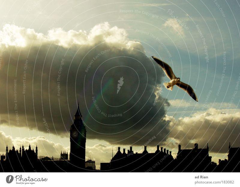 London Calling Himmel Stadt Sommer Sonne Wolken Haus Herbst Gebäude Freiheit Vogel Stimmung Wetter Brücke Turm Bauwerk Skyline