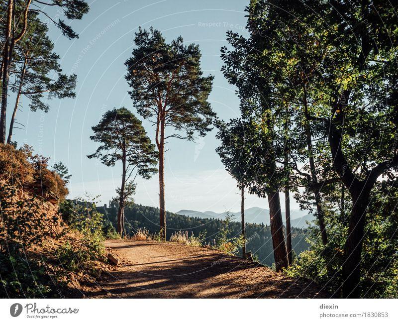 Hinweg Ferien & Urlaub & Reisen Tourismus Ausflug Berge u. Gebirge wandern Umwelt Natur Landschaft Pflanze Baum Wald Pfälzerwald Mittelgebirge Wege & Pfade
