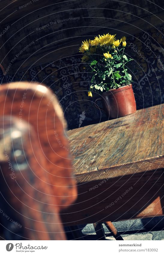 Krakauer Blümchen Dekoration & Verzierung Stuhl Tisch Pflanze Sonne Sonnenlicht Frühling Sommer Herbst Blume Blatt Blüte Topfpflanze Blumenstrauß Holz braun
