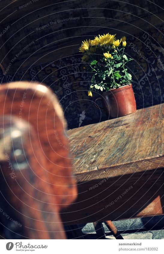 Krakauer Blümchen Pflanze grün Sommer Sonne Blume Blatt schwarz gelb Herbst Blüte Frühling grau Holz braun Dekoration & Verzierung Tisch