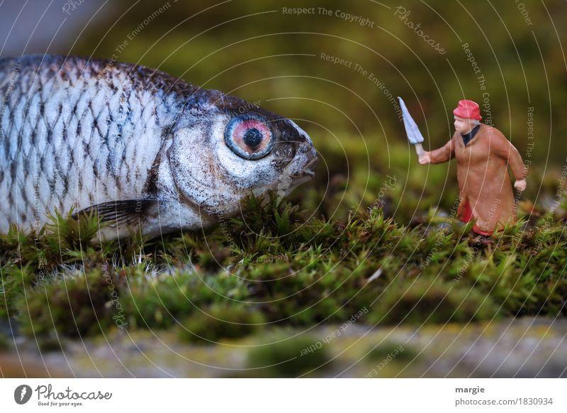 Miniwelten - Kommst du du jetzt nach Hause! Lebensmittel Fisch Bioprodukte Mensch feminin Frau Erwachsene 1 Pflanze Moos Grünpflanze Tier Haustier Wildtier