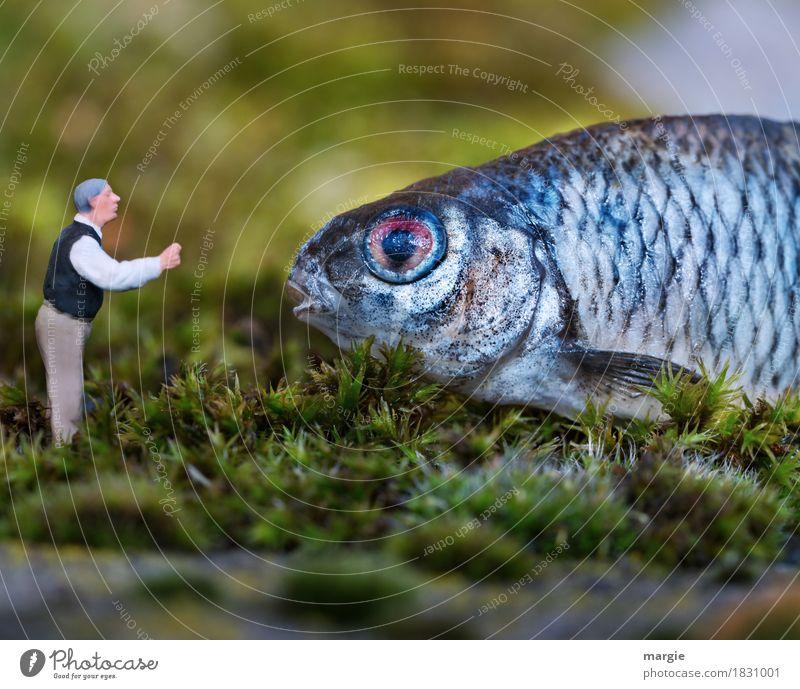 Miniwelten - Ansprache Mensch maskulin Mann Erwachsene 1 Tier Nutztier Wildtier Fisch Tiergesicht Schuppen sprechen blau grün Tierliebe Figur Miniatur Moos