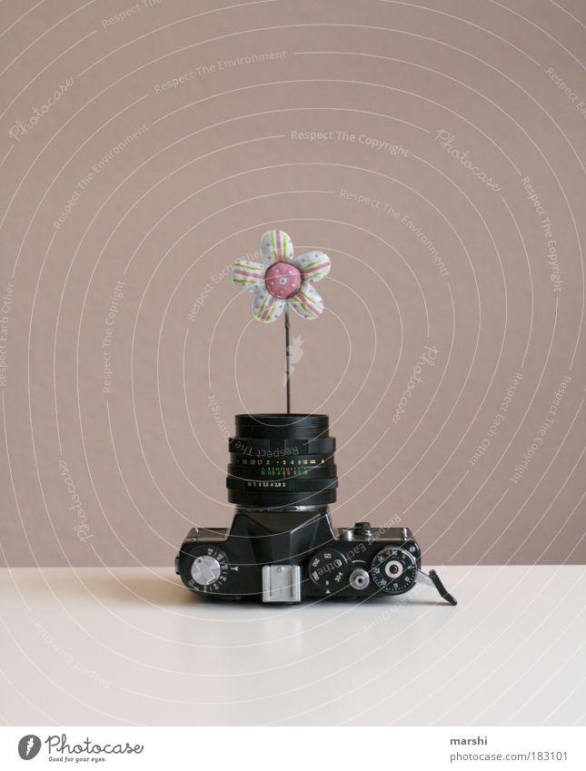 Pflück mich... alt Blume Blüte Kunst Wachstum Freizeit & Hobby analog Blühend Fotograf Fotografieren Vase Objektiv Inszenierung drahtig