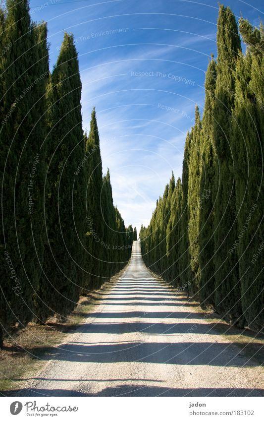 der weg ist das ziel Himmel blau schön Baum Pflanze Straße Wege & Pfade Stimmung gehen Treppe Ordnung elegant ästhetisch Häusliches Leben Italien Warmherzigkeit