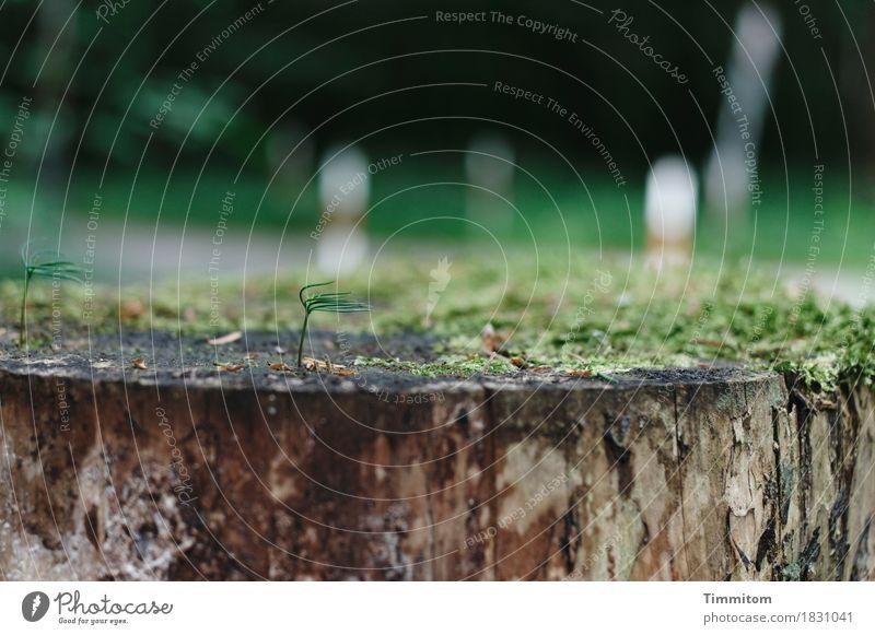 Moos zu Füßen und das Haar im Wind. Umwelt Natur Pflanze Wald Wege & Pfade Holz Wachstum natürlich braun grün Baumstumpf Farbfoto Außenaufnahme Detailaufnahme