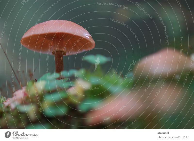 Waldpilz Natur grün schön Pflanze Einsamkeit ruhig Umwelt Leben Herbst Traurigkeit braun Zufriedenheit Klima warten Wachstum frisch