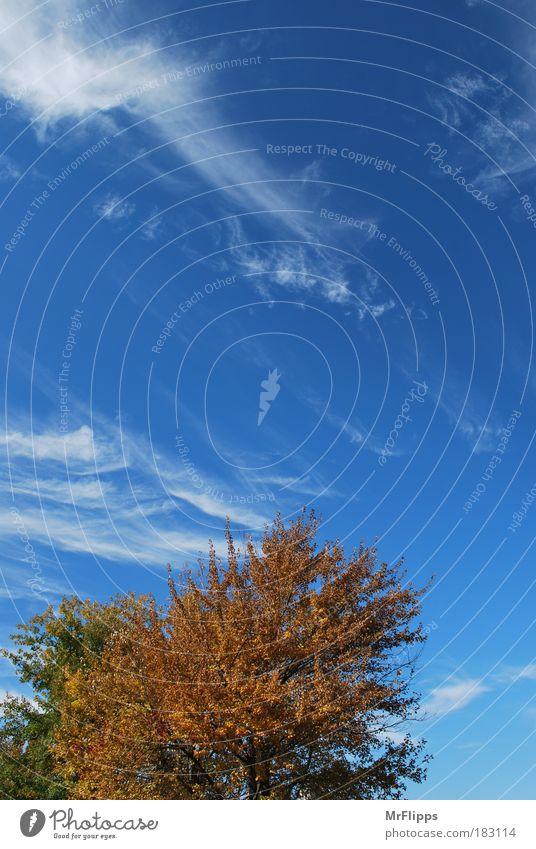 Strömung Farbfoto Außenaufnahme Luftaufnahme Menschenleer Tag Licht Sonnenlicht Weitwinkel Natur Landschaft Himmel Wolken Herbst Schönes Wetter Park