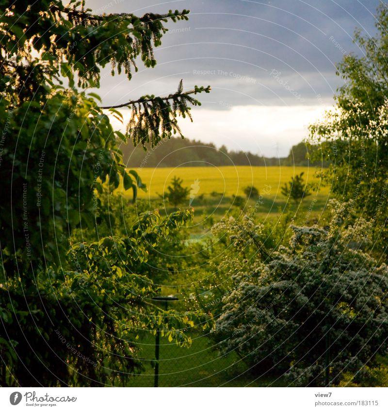 Sonnenschein nach Regen. Natur Himmel Baum Sonne grün Pflanze Wald Erholung Wiese Park Regen Landschaft Wetter Umwelt Horizont Sträucher