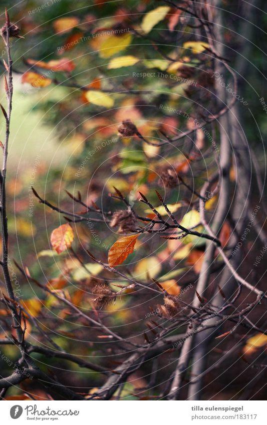 bunt Farbfoto Außenaufnahme Muster Menschenleer Textfreiraum Mitte Schwache Tiefenschärfe Umwelt Natur Herbst Baum Blatt Park alt verblüht natürlich schön