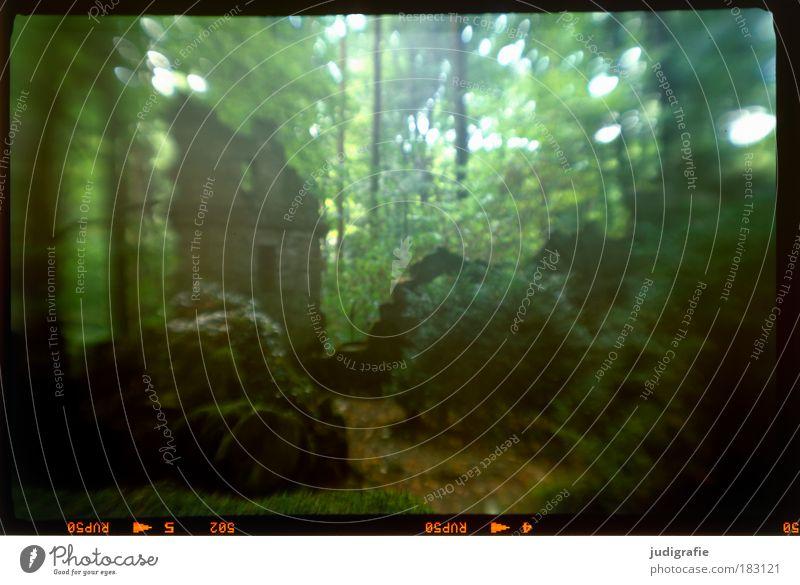 Im Wald Farbfoto Außenaufnahme Tag Unschärfe Umwelt Natur Landschaft Pflanze Baum Moos dunkel gruselig grün Einsamkeit Frieden Idylle Tod Friedhof Ruine Grab