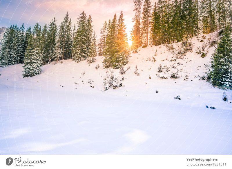 Sun strahlt durch Tannenwald im Winter aus Ferien & Urlaub & Reisen blau Weihnachten & Advent grün weiß Sonne Baum Landschaft Freude Wald Berge u. Gebirge