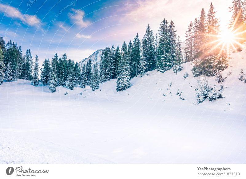 Wintersonnenschein im Wald Ferien & Urlaub & Reisen Weihnachten & Advent grün weiß Sonne Baum Freude Berge u. Gebirge kalt Gefühle Schnee Horizont Textfreiraum