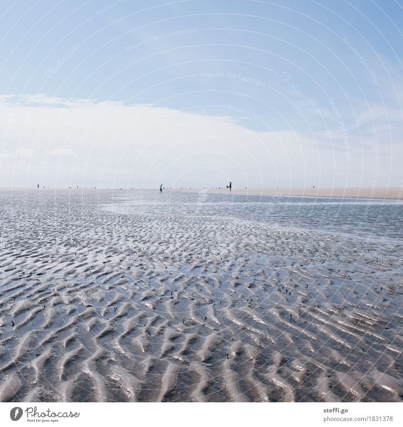 Lust auf 'ne Wattwanderung? Ferien & Urlaub & Reisen Tourismus Ausflug Abenteuer Ferne Freiheit Sommer Sommerurlaub Sonne Strand Meer Mensch 2 Umwelt Natur