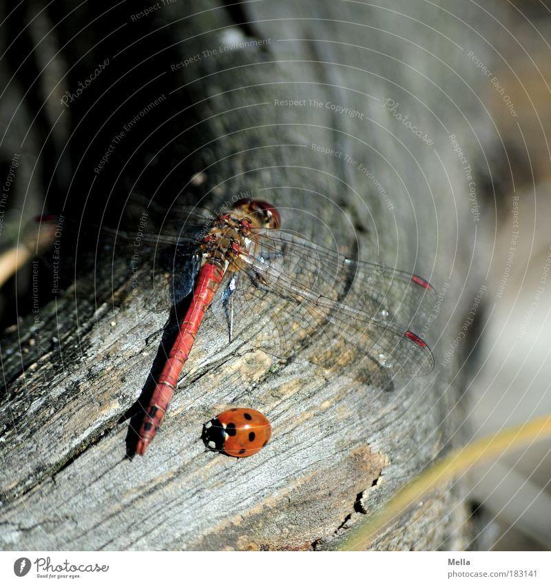 Ich möcht' so gern dein Freund sein Natur ruhig Tier Holz Freundschaft Zusammensein Umwelt sitzen Vertrauen natürlich niedlich positiv Zusammenhalt Käfer