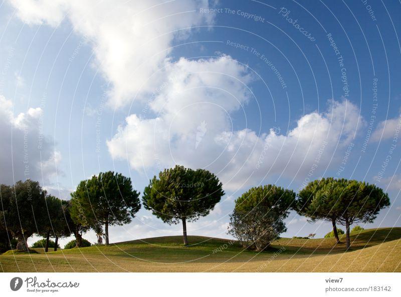 Reihe Natur Pflanze schön Sommer Sonne Baum Erholung Einsamkeit Landschaft ruhig Umwelt Wiese Gras Park Zufriedenheit Ordnung