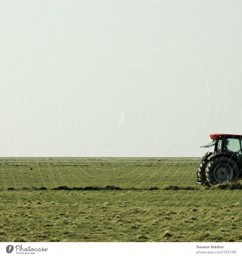 Kleiner roter Traktor Pflanze rot Arbeit & Erwerbstätigkeit Wiese Gras Landschaft Feld Küste fahren Insel Technik & Technologie Landwirtschaft Ernte Maschine Ackerbau Nordsee