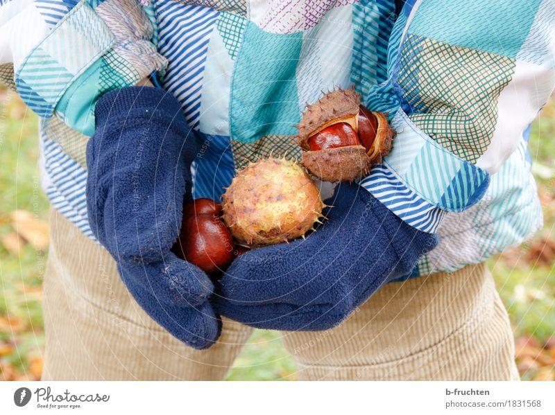 Kastaniensammler Kind Junge 3-8 Jahre Kindheit Jacke Handschuhe berühren entdecken Freizeit & Hobby Freude Kastanienbaum ansammeln Herbst kastanienschale