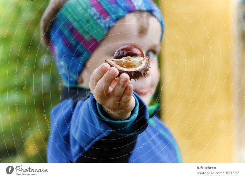 Herbstgruß Junge 1 Mensch 3-8 Jahre Kind Kindheit Jacke entdecken blau Kastanienschale Hand Finger zeigen Schalenfrucht Kopf Stirnband Auge Farbfoto