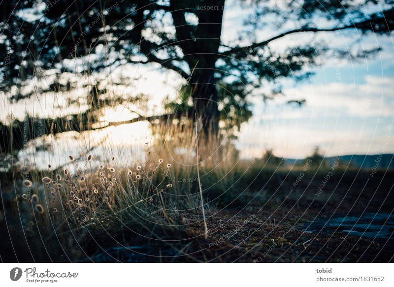 Idylle Himmel Natur Pflanze Sonne Baum Landschaft Wolken Ferne Gras Felsen Horizont Schönes Wetter Freundlichkeit Hügel nah