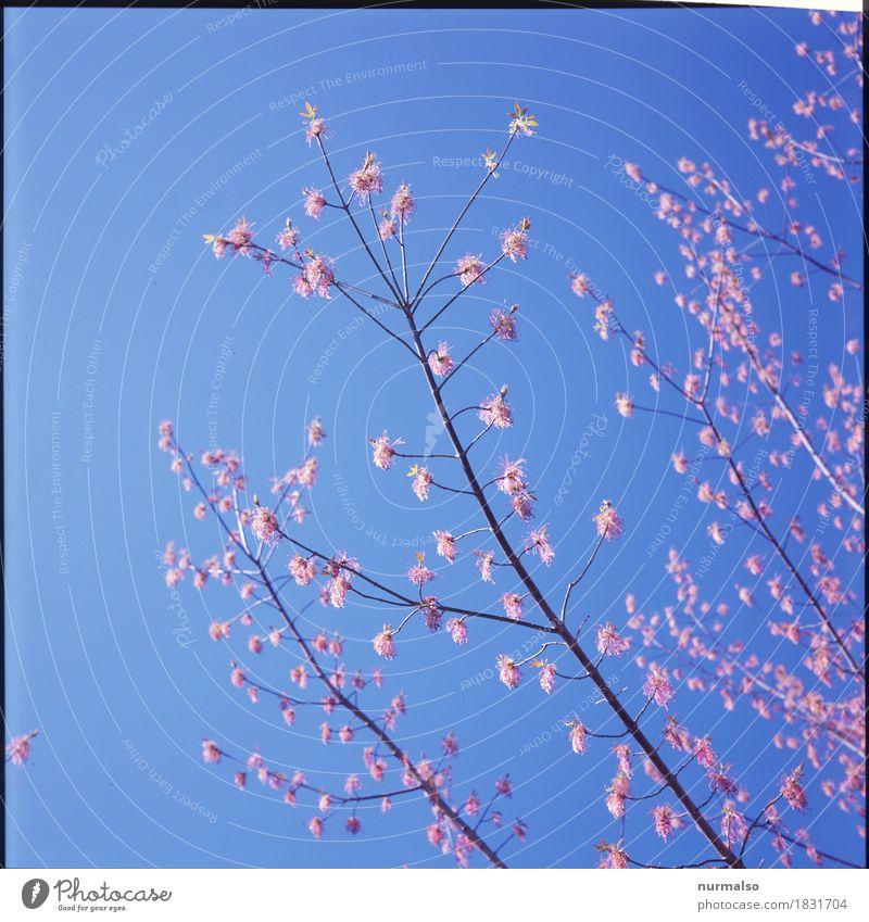 Frühlingshauch II Stil schön Garten Kunst Sonne Klima Schönes Wetter Baum Blüte Park Blühend Duft entdecken Erholung genießen leuchten Liebe ästhetisch