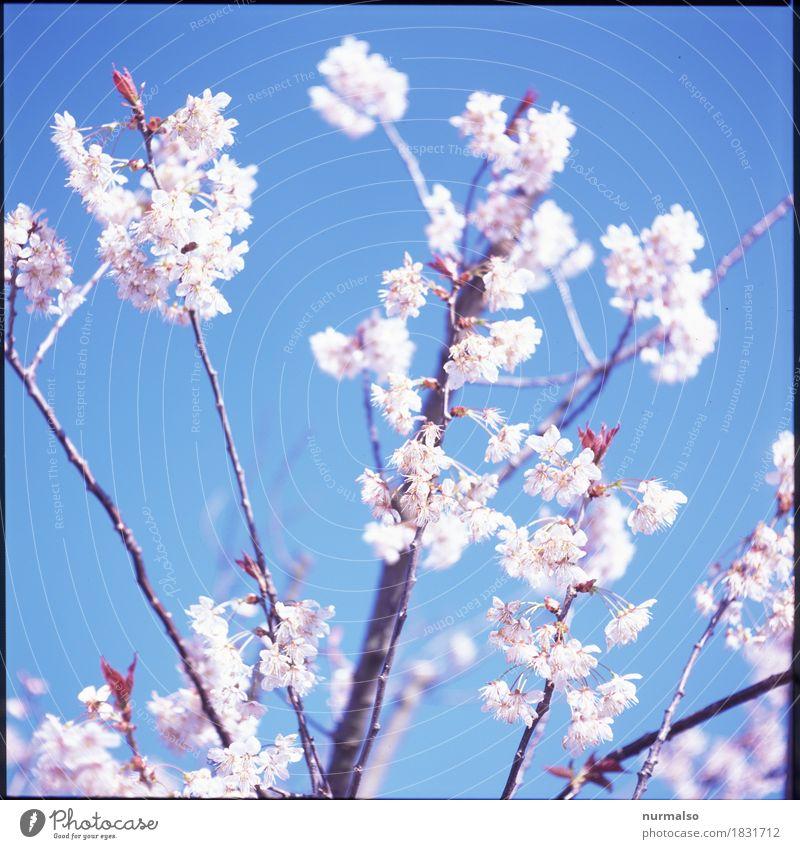 Antidepressiva Lifestyle Freude Glück Erholung Duft Freizeit & Hobby Traumhaus Garten Natur Frühling Klima Klimawandel Baum Blüte exotisch Park Blühend