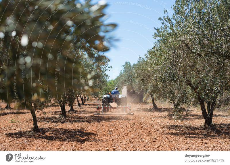 Traktor und Olivenbäume. Natur Pflanze grün Baum Landschaft natürlich Gras Arbeit & Erwerbstätigkeit Industrie Gemüse Beruf Spanien Bauernhof Ernte Ackerbau