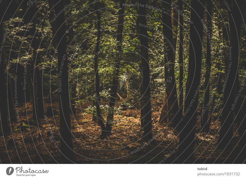 Waldlichtung Natur Landschaft Pflanze Schönes Wetter Baum Idylle Baumstamm Waldboden Farbfoto Menschenleer Licht Schatten Kontrast Silhouette