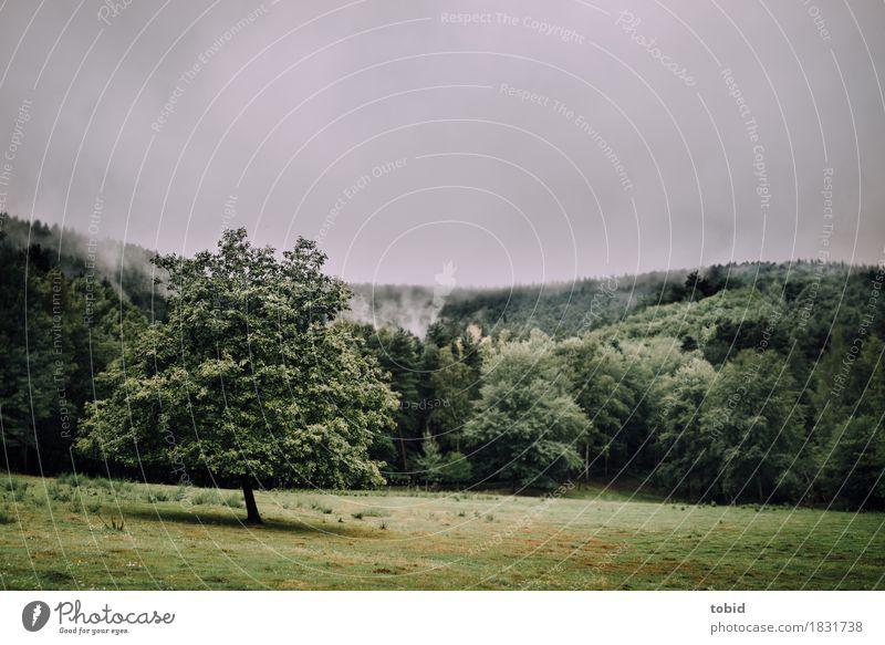 Einsam Natur Landschaft Urelemente Himmel Wolken Horizont schlechtes Wetter Nebel Baum Gras Moos Wald Hügel bedrohlich dunkel frei grün Einsamkeit