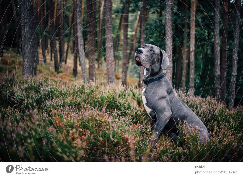 Meister Schlappohr Pt.8 Natur Hund Pflanze Baum Landschaft Tier Wald Gras grau Idylle sitzen ästhetisch Sträucher warten beobachten Hügel