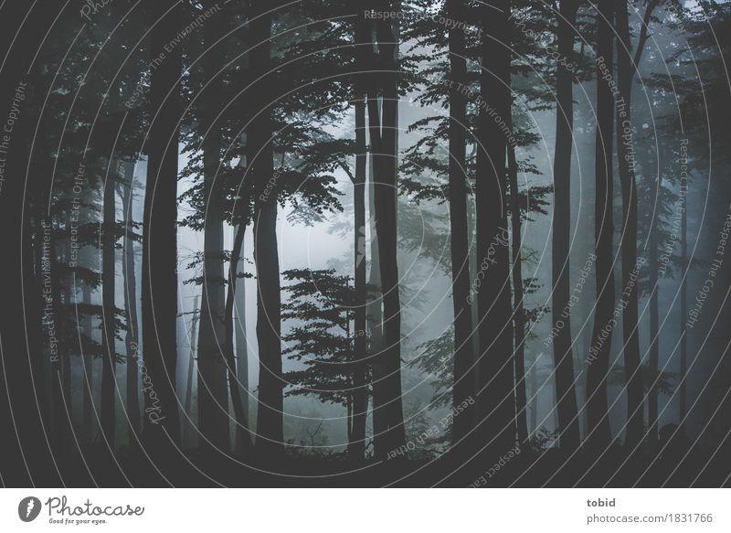 Regenwald Natur Landschaft Pflanze Wasser Nebel Baum Gras Wald bedrohlich dunkel Einsamkeit Endzeitstimmung Idylle mystisch Baumstamm Blatt Farbfoto