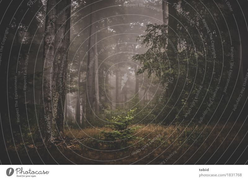 Herbstzauber Natur Landschaft Pflanze Nebel Baum Wald dunkel Einsamkeit Endzeitstimmung mystisch Nebelschleier Nebelwald Gras Baumstamm Farbfoto Gedeckte Farben