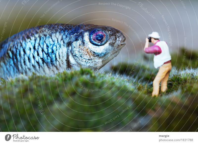 Miniwelten - Bitte recht freundlich! Mensch Mann blau grün Tier Erwachsene maskulin Fisch Nutztier