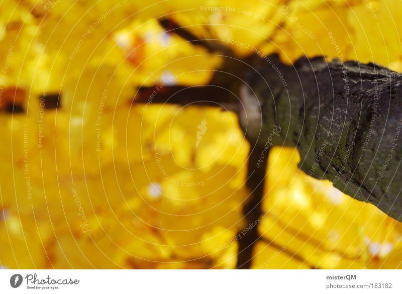 Golden Times. Natur Baum Blatt gelb Tod Herbst oben Holz gold hoch ästhetisch Perspektive Spaziergang Klettern Jahreszeiten Baumstamm