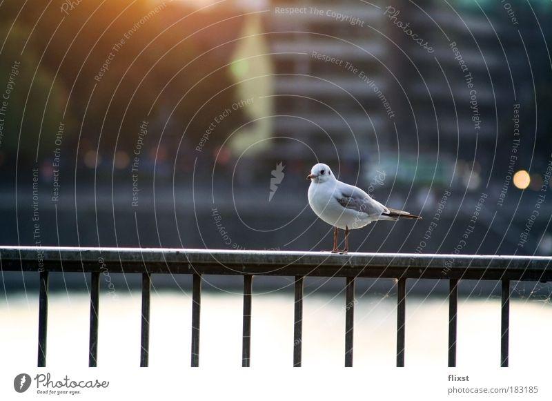 alone... ruhig Einsamkeit Herbst Gelassenheit Schönes Wetter Taube Tier