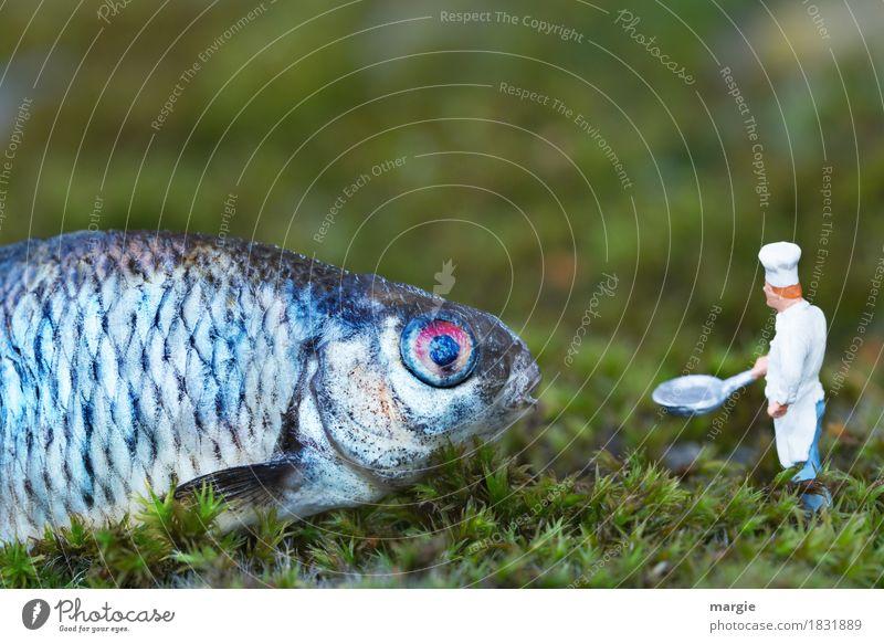 Miniwelten - Ab, in die Pfanne! Lebensmittel Fisch Bioprodukte Koch Arbeitsplatz Küche Gastronomie Mensch maskulin Mann Erwachsene 1 Tier Nutztier Wildtier blau