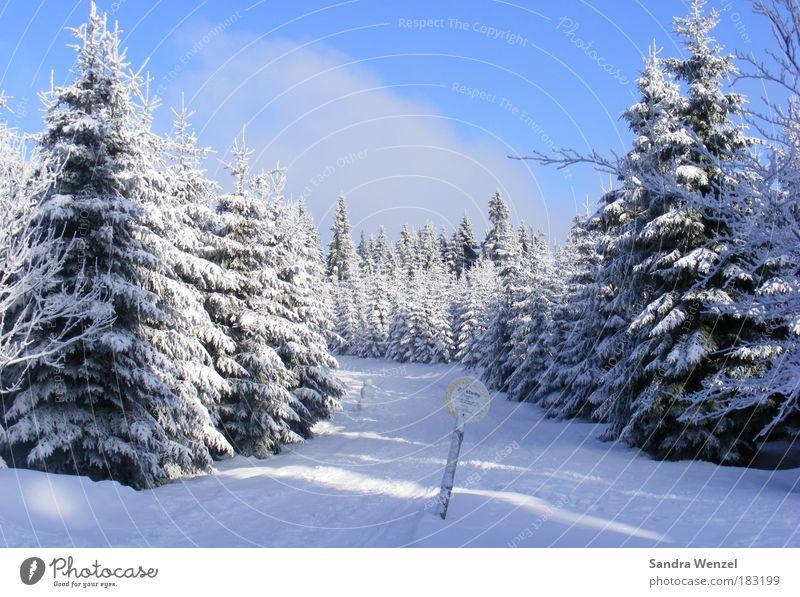 Zauberwald Natur Himmel weiß Baum blau Pflanze Winter Ferien & Urlaub & Reisen ruhig Wald kalt Schnee Erholung Berge u. Gebirge träumen Wege & Pfade