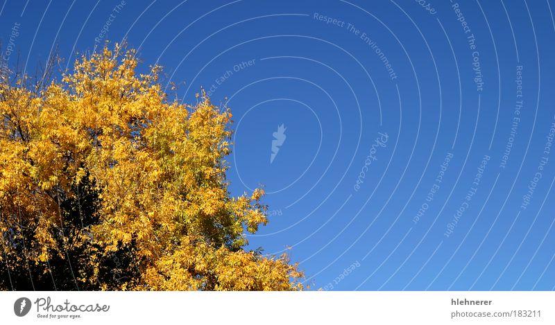 Himmel Natur blau schön Baum Farbe Blatt Umwelt gelb Herbst Park natürlich