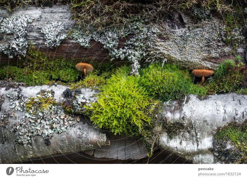 wohngemeinschaft   symbiose Natur Pflanze Herbst natürlich Wachstum Dach Hütte Gesellschaft (Soziologie) Moos Pilz Norwegen Flechten Dachrinne Symbiose