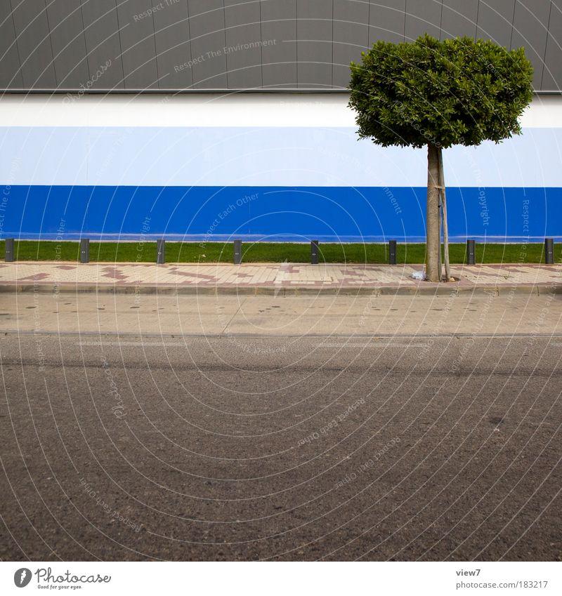 EINBAUM Farbfoto mehrfarbig Außenaufnahme Detailaufnahme Menschenleer Textfreiraum unten Starke Tiefenschärfe Natur Pflanze Baum Gras Haus Industrieanlage Mauer