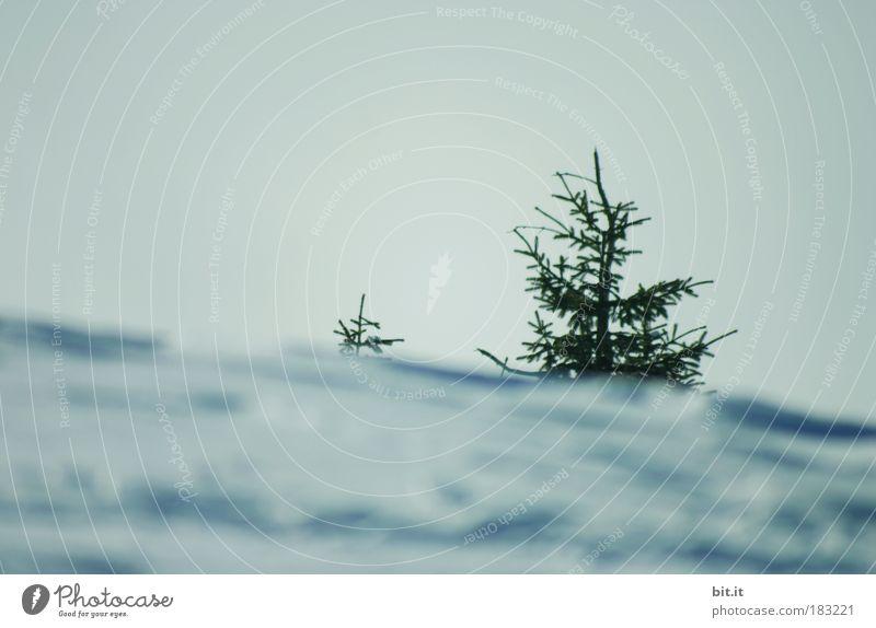 WEIHNACHTSKARTE SCHRÄG Winter Schnee Winterurlaub Berge u. Gebirge schneefall snow Umwelt Natur Landschaft Luft Himmel Horizont Sonnenlicht Wetter Eis Frost