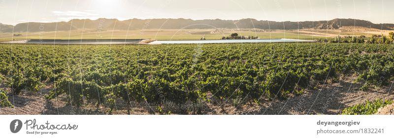 Weinberge bei Sonnenuntergang Frucht Industrie Technik & Technologie Natur Pflanze Erde Blatt Fluss Wachstum nass grün Bewässerung Kanal Druckrohrleitung