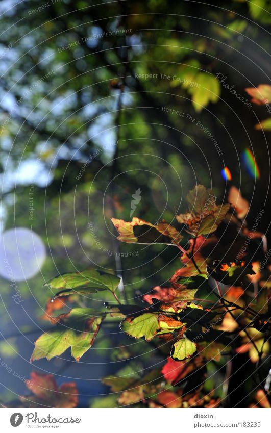 Amsterdammer Herbst Farbfoto Außenaufnahme Textfreiraum oben Tag Licht Reflexion & Spiegelung Lichterscheinung Sonnenstrahlen Gegenlicht Schwache Tiefenschärfe
