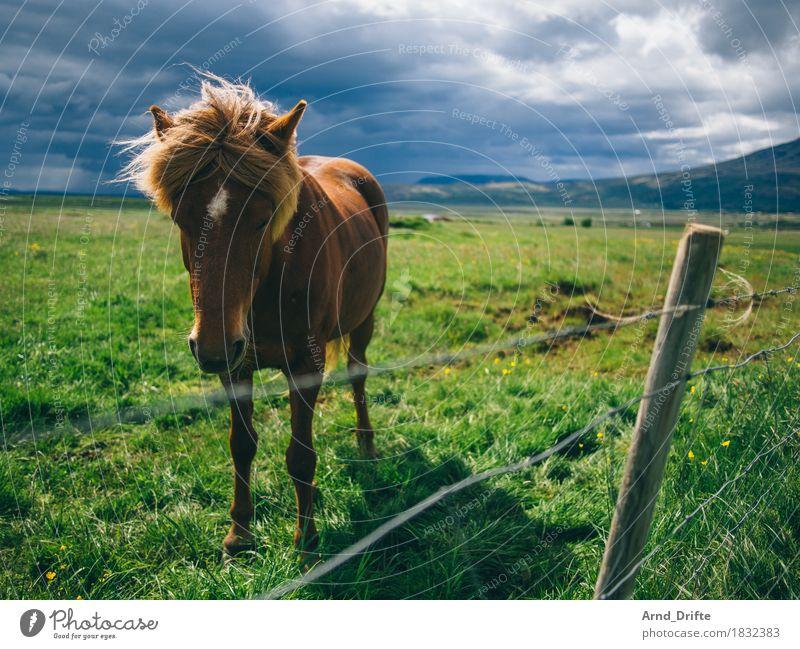 Island - Pony Ferien & Urlaub & Reisen Ausflug Abenteuer Ferne Berge u. Gebirge Landschaft Pflanze Tier Himmel Wolken Gewitterwolken Wetter schlechtes Wetter