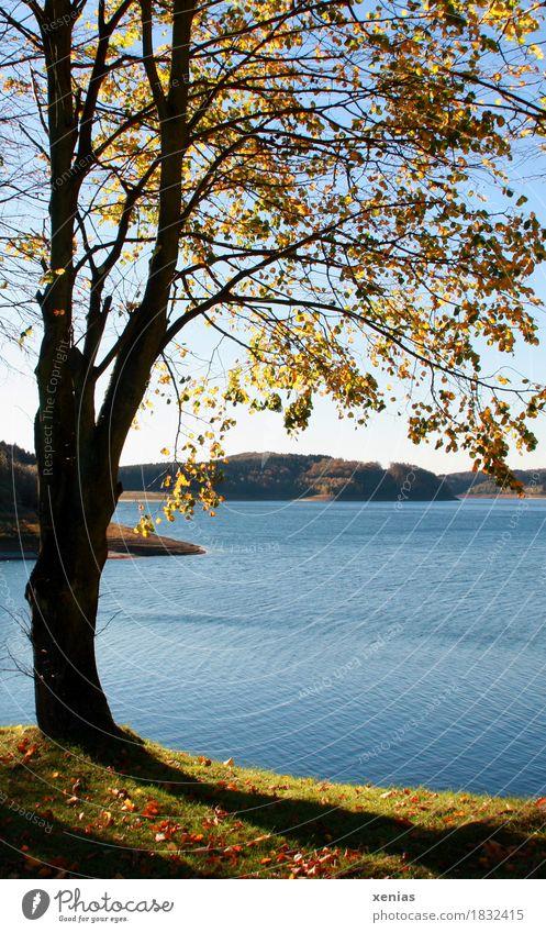 Baum steht am See im Herbst Talsperre Landschaft Wasser Herbstfärbung Dhünntalsperre Bergisches Land Stausee Sonnenlicht Starke Tiefenschärfe wandern blau gelb