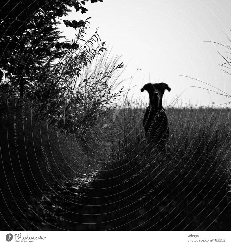 Wachsam Freizeit & Hobby Jagd Tier Haustier Hund 1 beobachten Blick frech Freundlichkeit Gefühle Stimmung Freude Glück Zufriedenheit Tierliebe Verantwortung