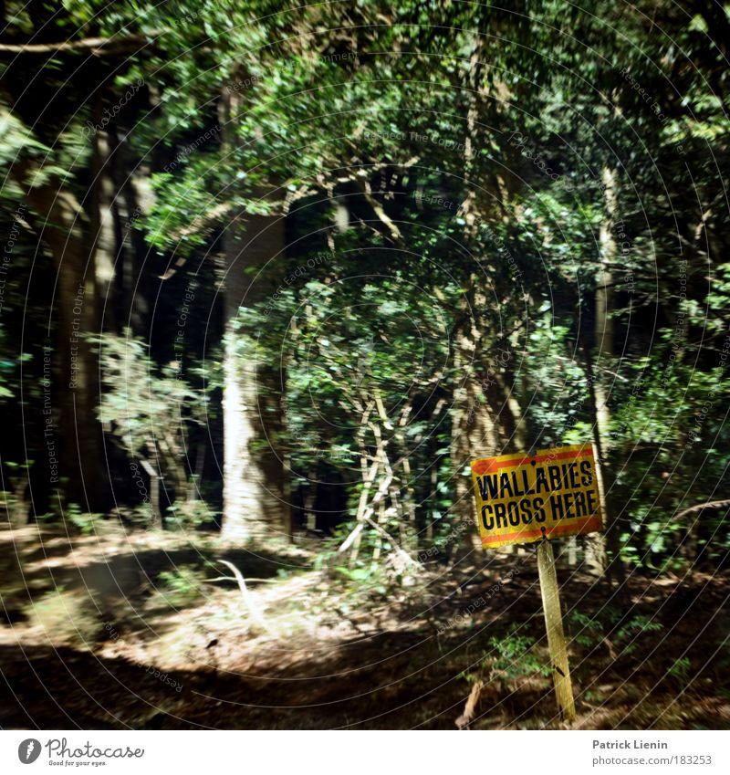 wallabies crossing Natur Baum Tier Ferne Straße Wald Berge u. Gebirge Freiheit Umwelt Ausflug Abenteuer Neugier Urwald Verkehrswege Autofahren Interesse