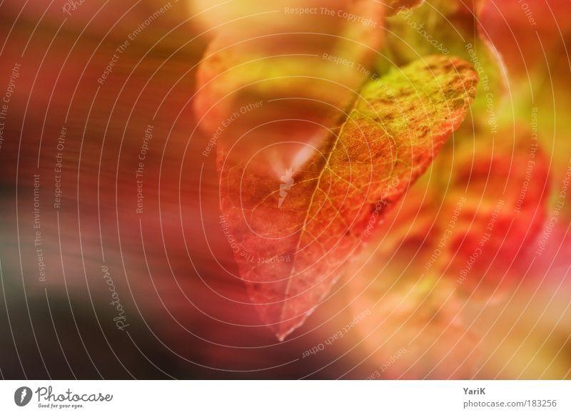 farbwind Natur schön rot Pflanze Blatt ruhig Wiese Wärme Herbst Gefühle Bewegung Gras Luft träumen Stimmung Wind