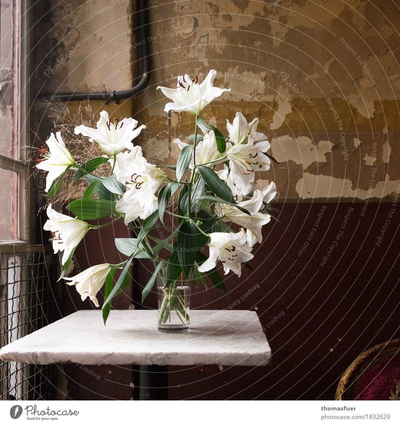 Lilien, Vase, alte Wand Innenarchitektur Dekoration & Verzierung Tisch Raum Treppenhaus Trauerfeier Beerdigung Stillleben Pflanze Blume Blüte Architektur Mauer
